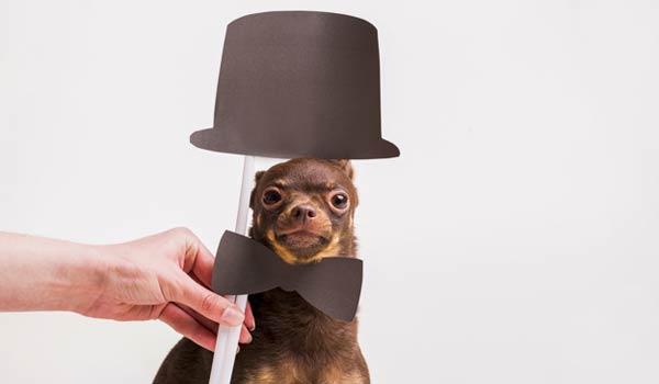 mini-hats-props
